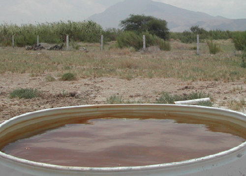 Well water - life for crops, but too contaminated for human consumption - Ceramic Water Filter Solutions